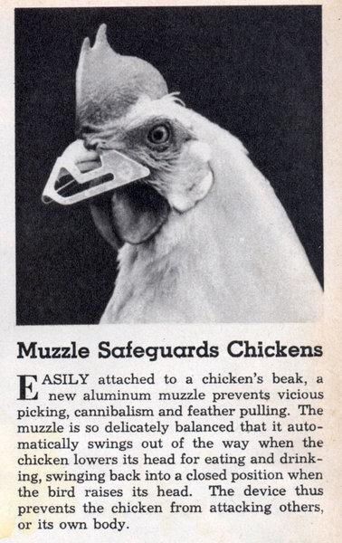lrg_chicken_muzzle